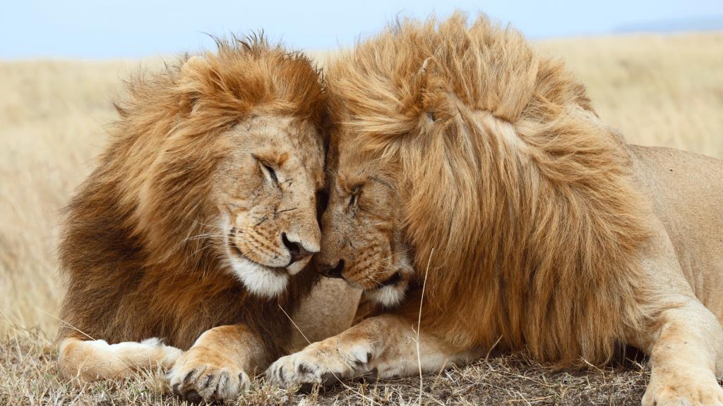 les définitions de l'animal à connaitre